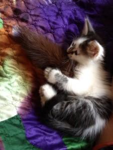 Котик с хвостом
