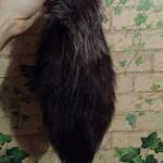Хвост лисий