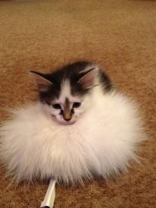 Кот и резинка для волос
